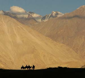 Camel_trek_Nubra_Valley-Ladakh