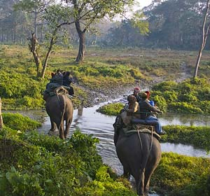 Elephant_safari-Jaldapara